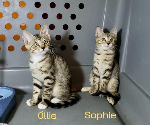 Ollie%20%26%20Sophie%2030_edited.jpg