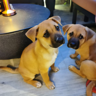 ROXIE and RIZZO 10.11.jpg