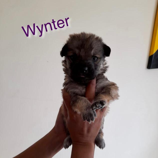 WYNTER.JPG