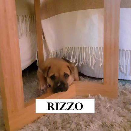 RIZZO 3.JPG