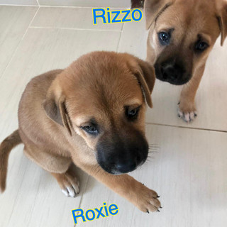 Roxie & Rizzo1 26.10.JPG
