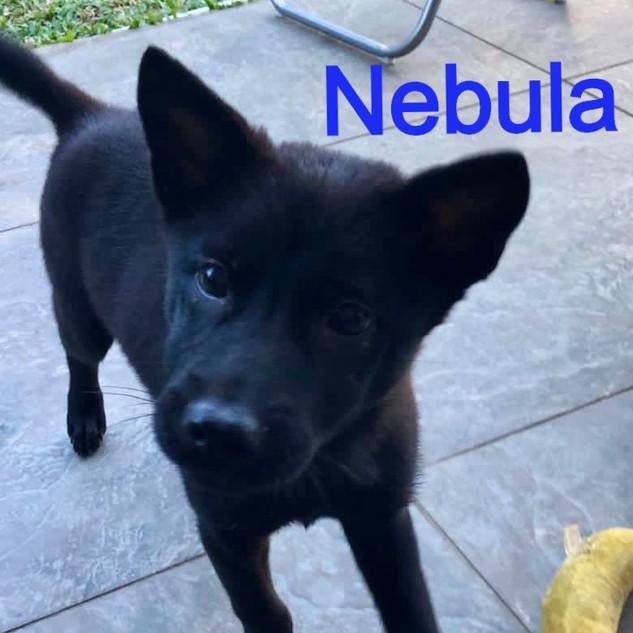 Nebula%2016_edited.jpg
