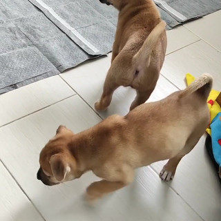 Roxie & Rizzo 26.10.MP4