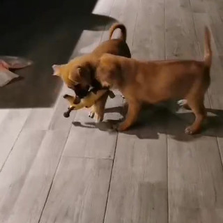ROXIE and RIZZO 10.11.mp4