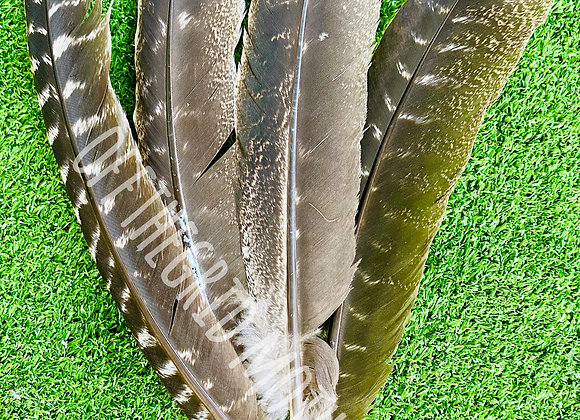 Smudge Feathers