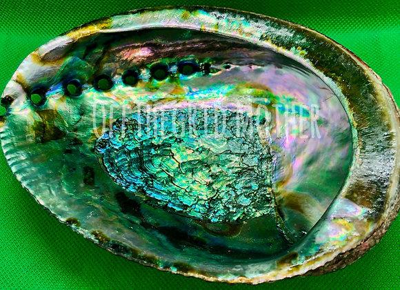 Abalone Shell