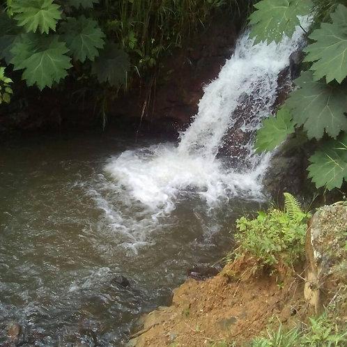 Hacienda vía a Mindo en Pichincha