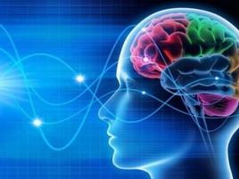 Le frequenze e stati cerebrali