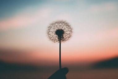mindfulness-semplice.jpg