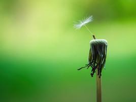 Come iniziare a praticare la Mindfulness?