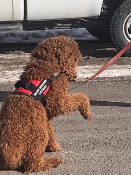 Braach dog - Lucy.jpg