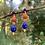 Thumbnail: Lapis Lazuli and Coral Earrings