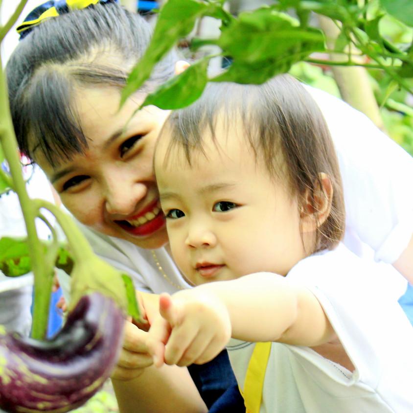 Tham quan vườn rau hữu cơ Happy Vegi