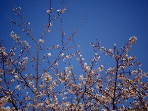 miyazaki 春♪