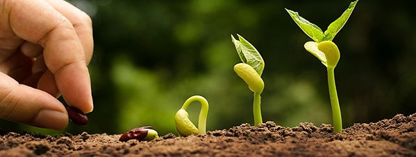 Growing-from-seed-banner-nw37zsukbwgo99y