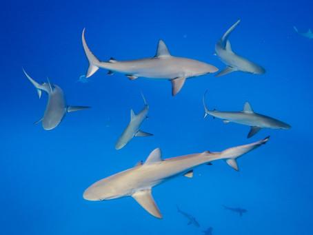 In the shark tank
