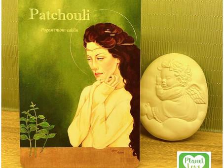 廣藿香 Patchouli