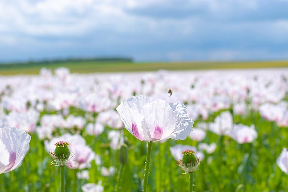Des fleurs de Lumière