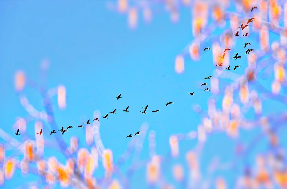 oiseaux dans le ciel