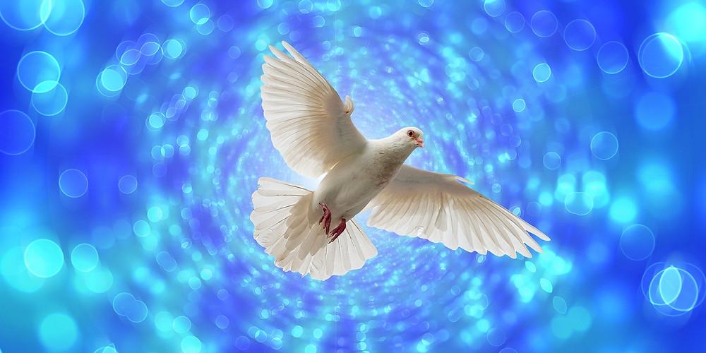 La colombe, la SHEKINAH