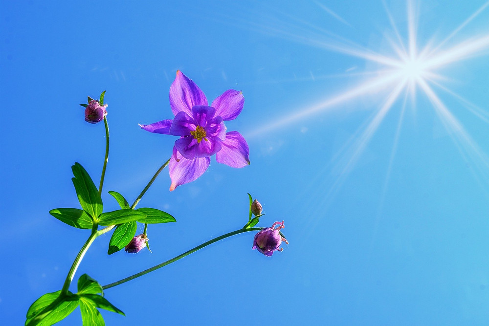 La Lumière d'une fleur violette dans un ciel bleu