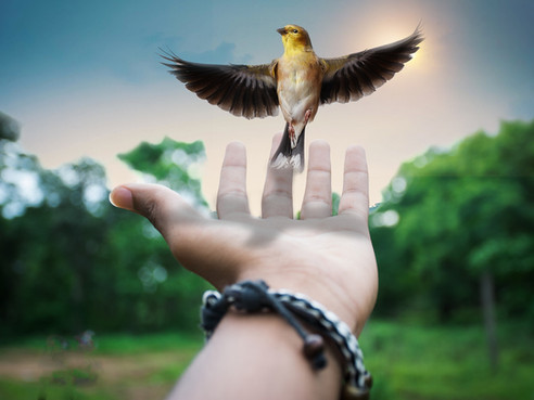 L'Ange de la Joie I La guérison vous est transmise
