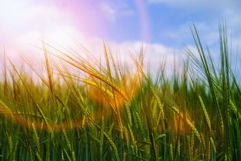 Elohim de la Paix | Le Soleil de cette Flamme