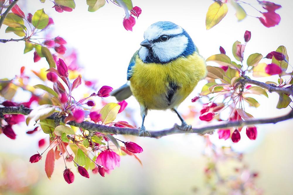petit oiseau bleu dans les fleurs roses