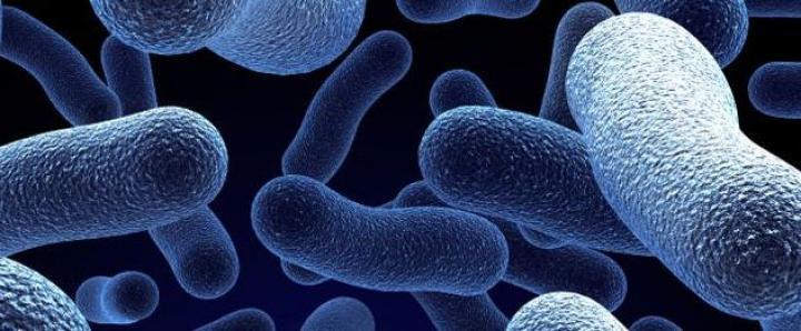 Legionela najviše pogađa srčane i plučne bolesnike, dijabetičare.