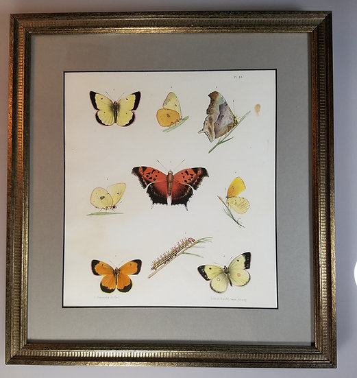 New York Agricultural Print of Butterfly Plate 35 - Ebenezer Emmons Jr