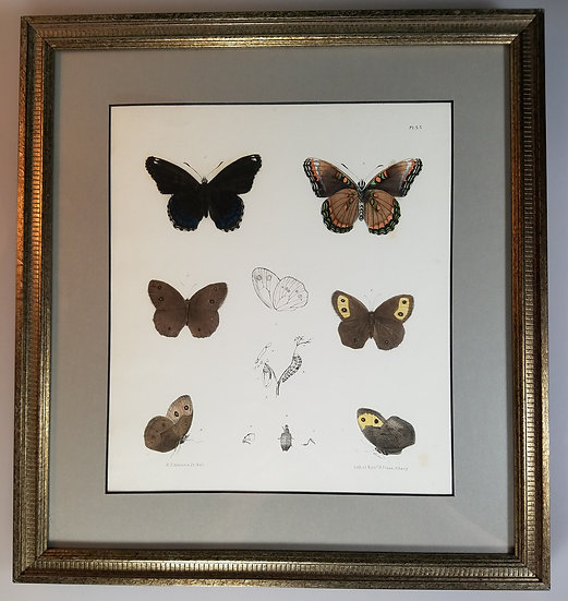 New York Agricultural Print Butterfly Plate 55 - Ebenezer Emmons Jr