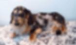 カニンヘンダックス | 小動物 | ノーザンみしま