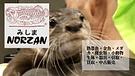 ノーザンみしま | 愛鷹亮 | プロキッククボクサー |  日本