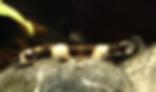 パンダシャークローチ | コイ類 | ノーザンみしま
