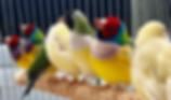 鳥類・猛禽類 | ノーザンみしま | アロワナからカワウソまで | 静岡発全国展開