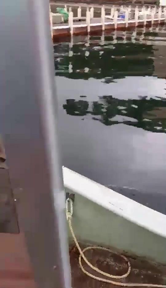 芦ノ湖放流の模様