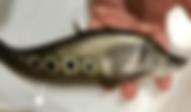 スポットナイフ | その他 | ノーザンみしま