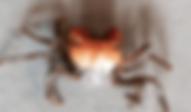 ハーフオレンジヴァンパイアクラブ | 昆虫他 | ノーザンみしま