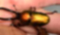 ニジイロクワガタ | 昆虫他 | ノーザンみしま