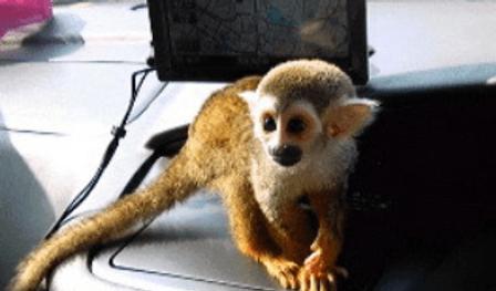 リスザル | 小動物 | ノーザンみしま
