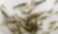 ミナミヌマエビ | 昆虫他 | ノーザンみしま