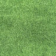 Supreme Green.JPG