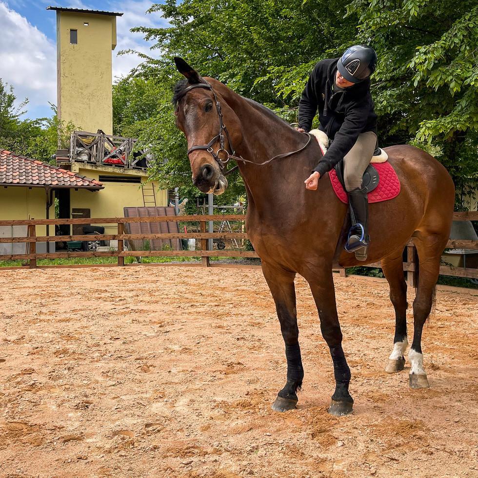 Horse Dream Sportiva-80.jpg
