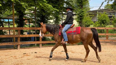 Horse Dream Sportiva-49.jpg
