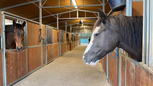 Campo Estivo 2021_equitazione estiva-24.