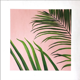 Pink Fern 20 x 20 (2015)