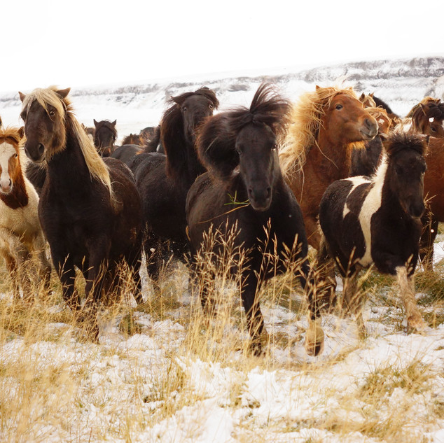 Horse pack final.jpg