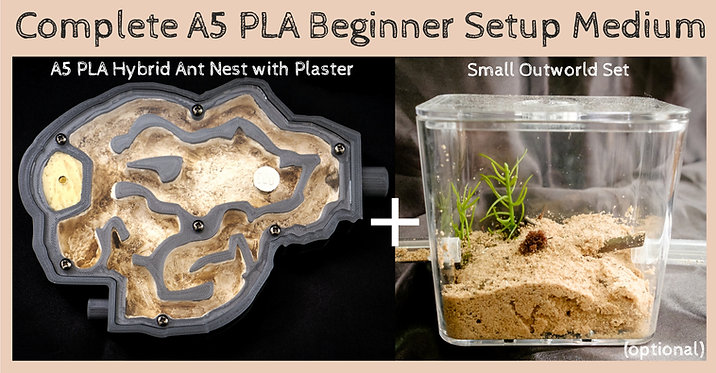 A5 PLA Ant Nest with Plaster and Outworld Beginner Setup Ant Farm Formicarium