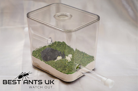 Small Ant Meadow Outworld Arena Formicarium Farm Ant Housing