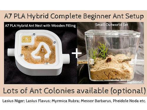 A7 PLA Hybrid Nest with wooden bed and Small Arena Set Complete Beginner Ant Setup
